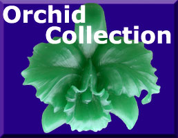 link to Orchid Collection Gallery